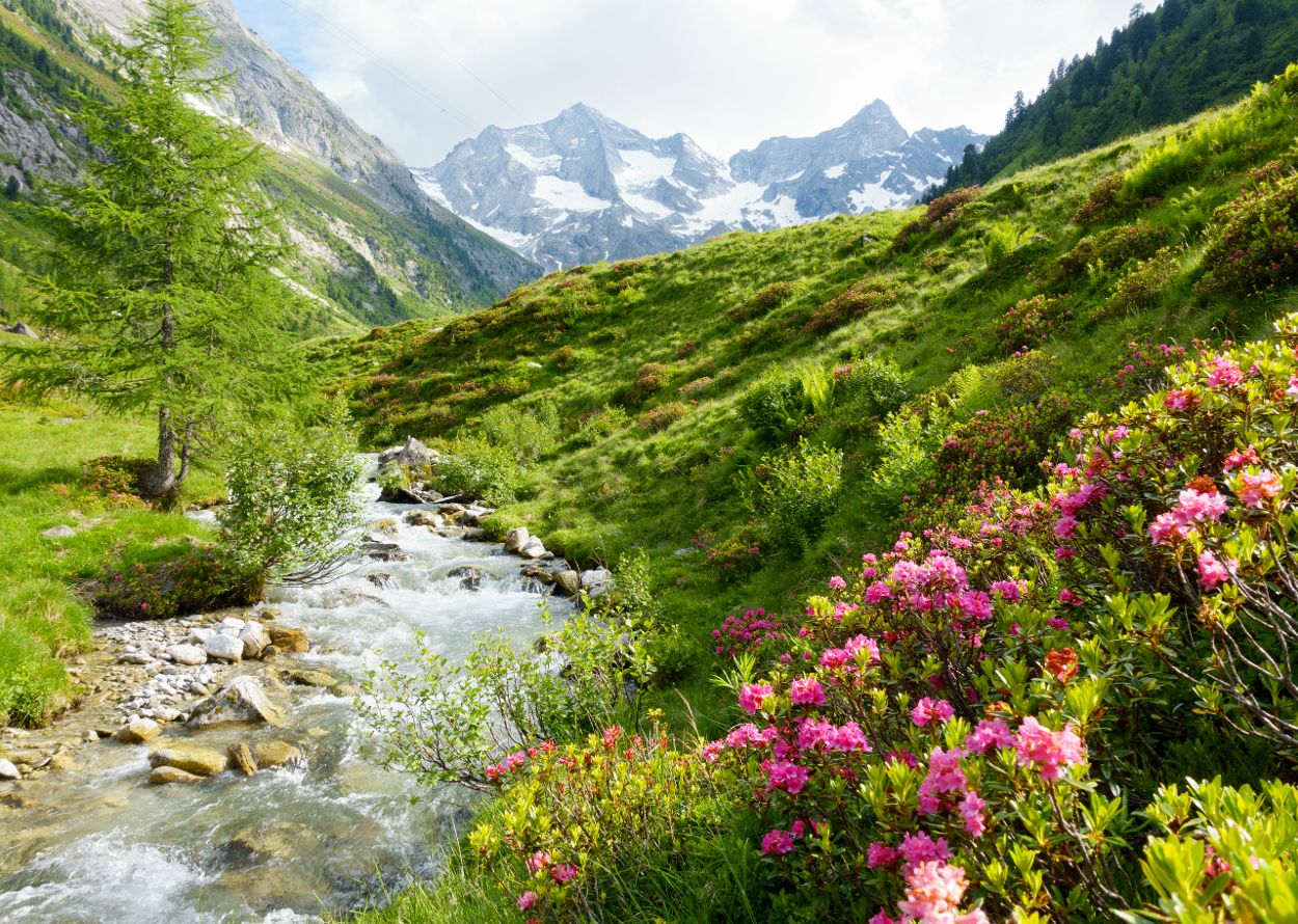 landschaft-bach1-foto-paul-wechselberger.jpg